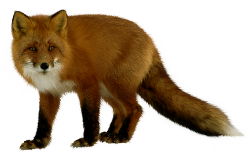Tube animaux page 14 - Clipart renard ...