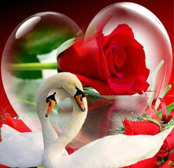 red rose i love you wallpaper - photo #33