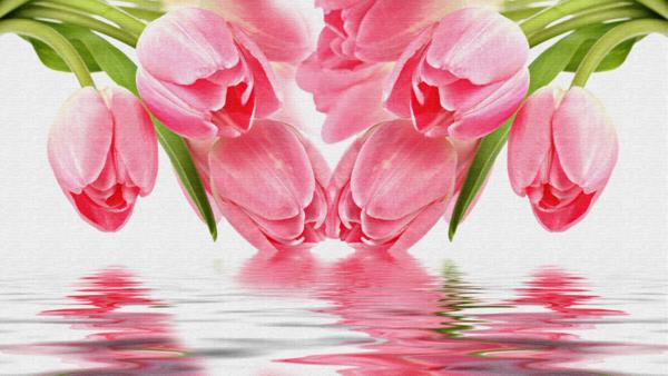 fond d'ecran gratuit tulipes