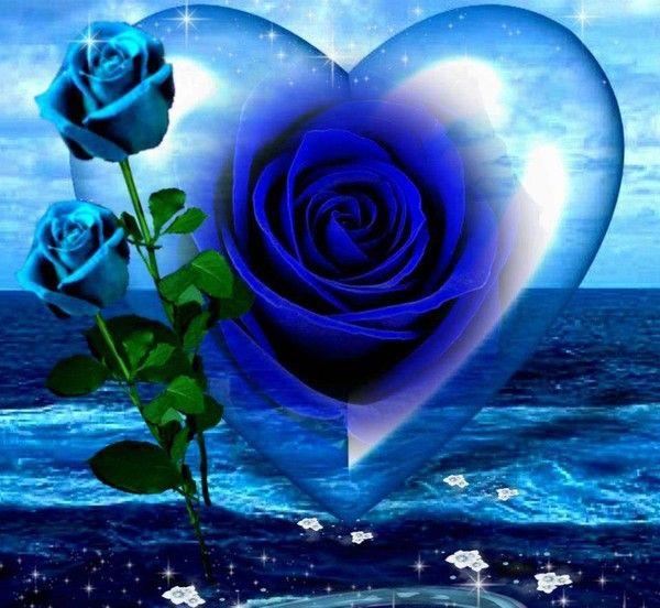 """Résultat de recherche d'images pour """"belles images de roses bleues"""""""