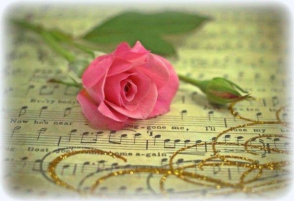 Une rose sur un parchemin - Comment couper une rose sur un rosier ...