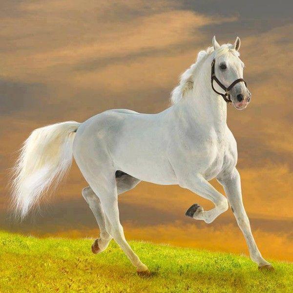 le plus beau cheval du monde 2015