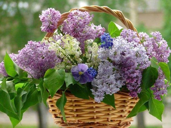 Fond ecran printemps page 12 for Bouquet de fleurs lilas