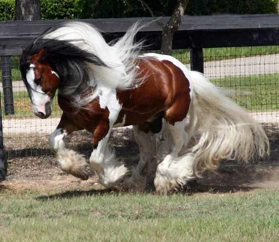 Un cheval au galop - Comment dessiner un cheval au galop ...