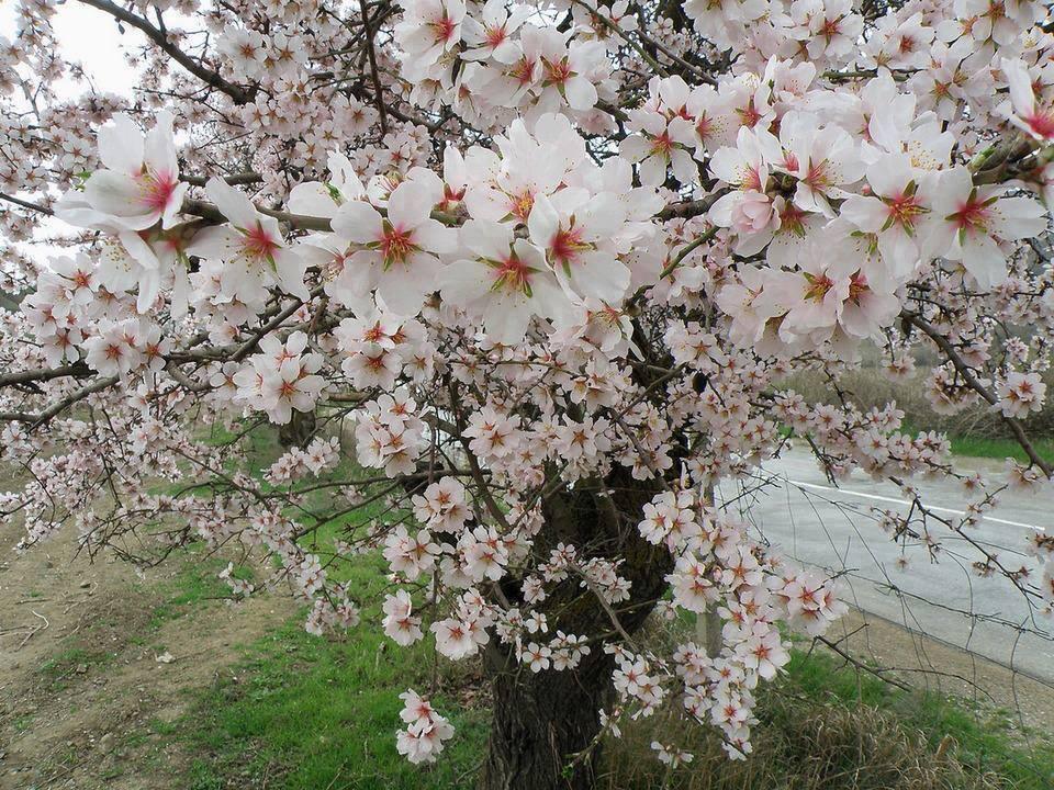 fond ecran printemps